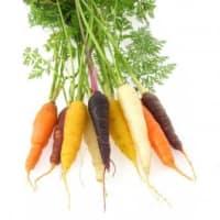 carottes multicolores