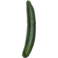 concombre(s) libanais