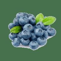 bleuets frais