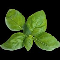 bouquet de basilic