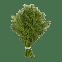 Bouquet(s) de persil et origan