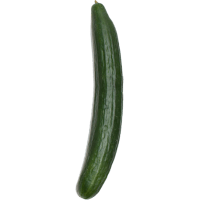 Concombre anglais VÔG