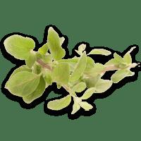 marjolaine frais